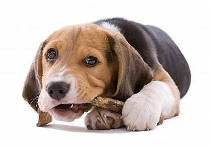 Dangerous Foods That Can Harm Your Puppy or Dog