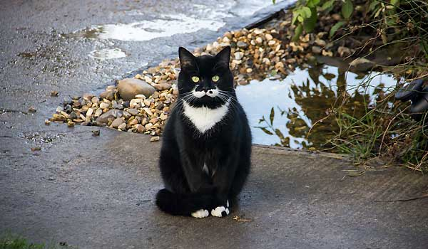 Should You Keep Your Cat Inside or Outside?