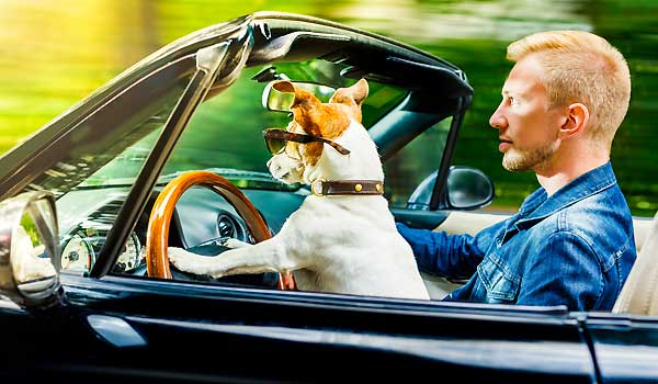 How To Get The Cheapest Pet Insurance