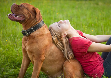 Why Your Dog Needs Obedience Lessons
