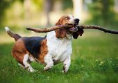 Are You Having A Hard Time Training Your Dog?