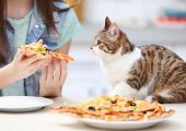 Human Foods That Are Harmful To Cats