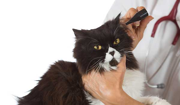 Cat Care and Signs Of Cat Illnesses To Watch Out