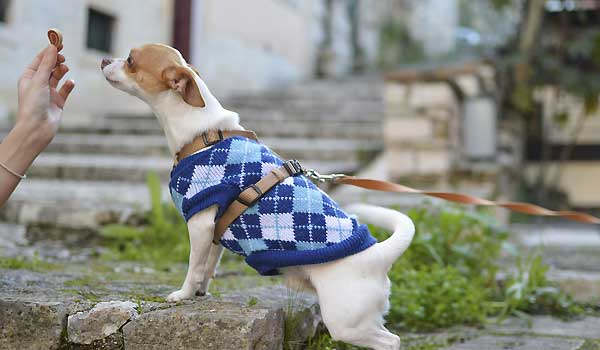 Is There a Good Reason For Your Dog To Wear Dog Clothes?