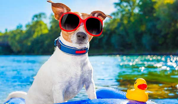 Caring For Your Dog In Hot Summer Months