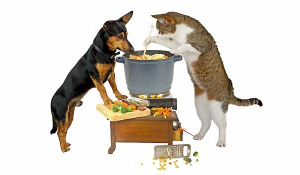 Tasty Pet Food Recipes for Cats and Dogs