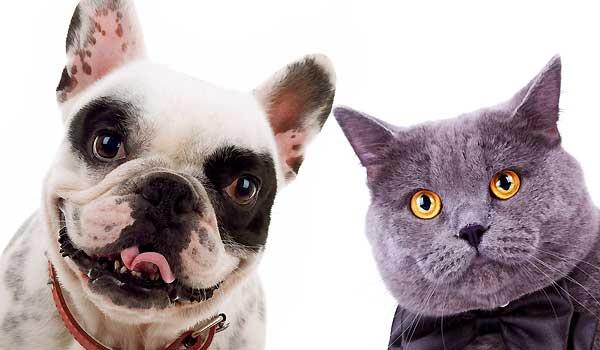 Cat & Dog Blog