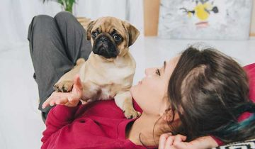 Puppy Training Tips and Tricks For New Owners