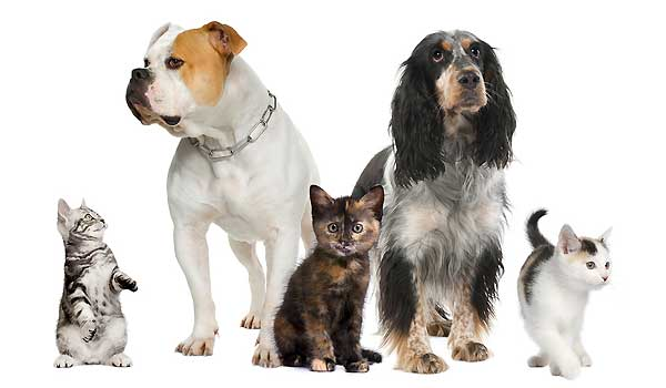 Pets and Pet Spending During The Covid-19 Pandemic